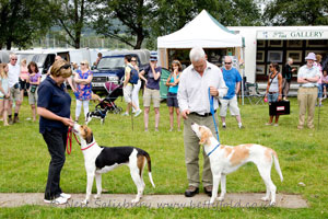 Fell Hound Show at Coniston Country Fair